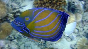 angelfish-202325 1920